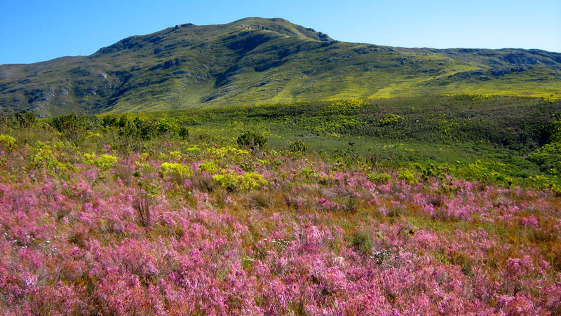 South african landscape word from the savanna for Landscape sa