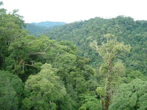 Field Trip - View from the Canopy Walkway