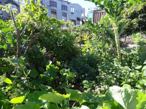 Not everyone can start designing and building permaculture villages or restore ecosystems, but a good place to start applying permaculture design principles is in your garden or yard. Here are some practical tips!